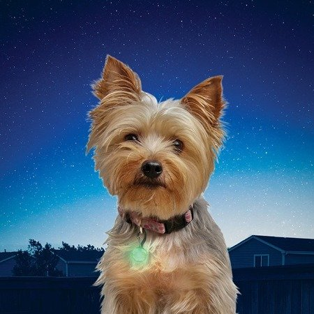 Nite Ize - PetLit® Collar Light - Lime Jewel - PCL02-03-17JE